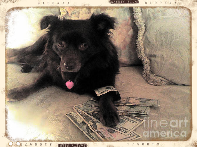 Animal Photograph - She Is In The Money by Nina Prommer