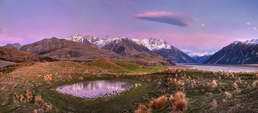 Sheep And Pond In Predawn Alpenglow Photograph by Colin Monteath