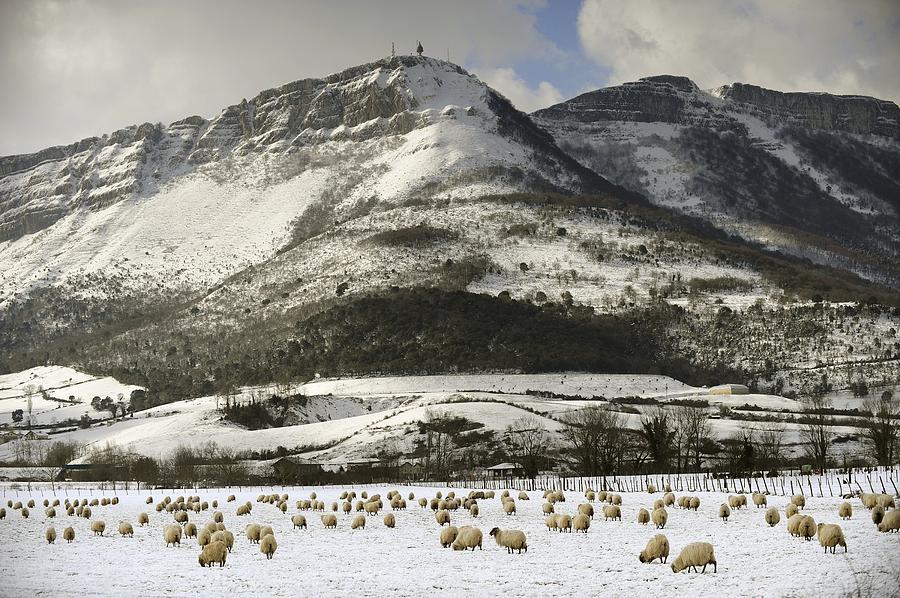Horizontal Photograph - Sheep In The Snow by Rafa Rivas