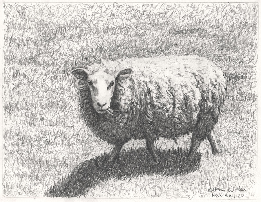 Sheep Drawing By Kathleen Walker