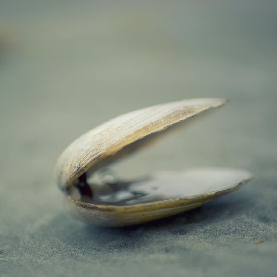 Square Photograph - Shell by Jill Ferry Photography