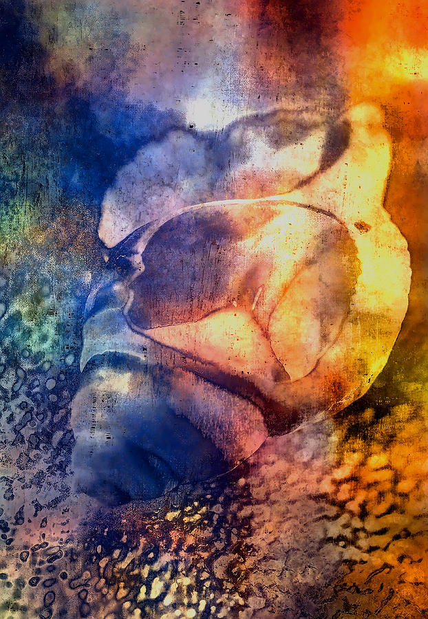 Framed Pyrography - Shell by Mauro Celotti
