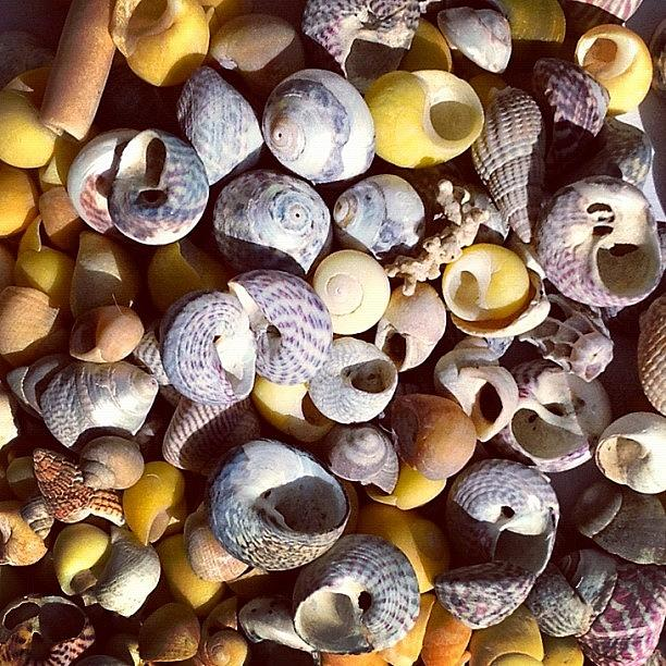 Shells Photograph - Shells from Brittany by Nic Squirrell