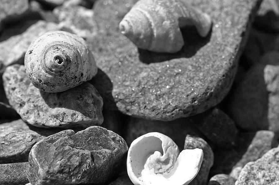 Shells Photograph - Shells I by David Rucker
