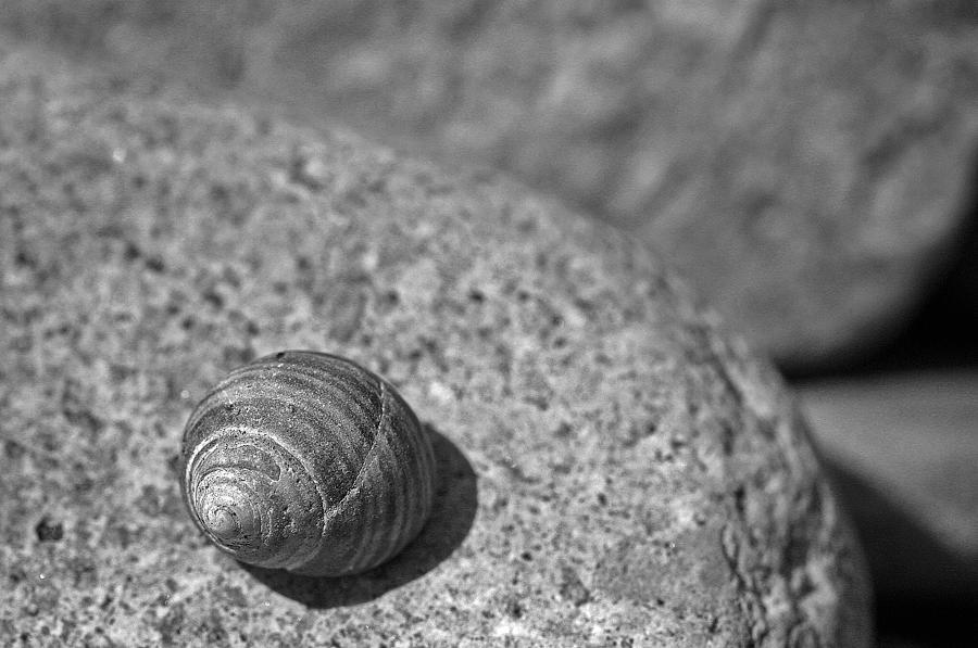 Shells Photograph - Shells IIi by David Rucker