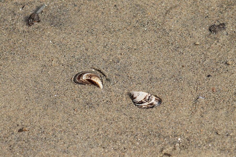 Beach Photograph - Shells On A Beach by Rebecca Frank