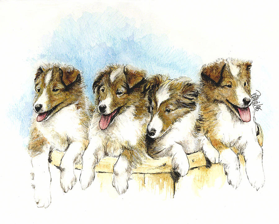 Sheltie Pups by Patrice Clarkson