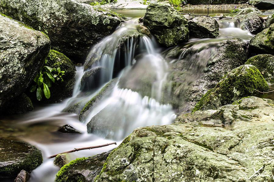 Landscape Pyrography - Shenandoah Stream by Shane York