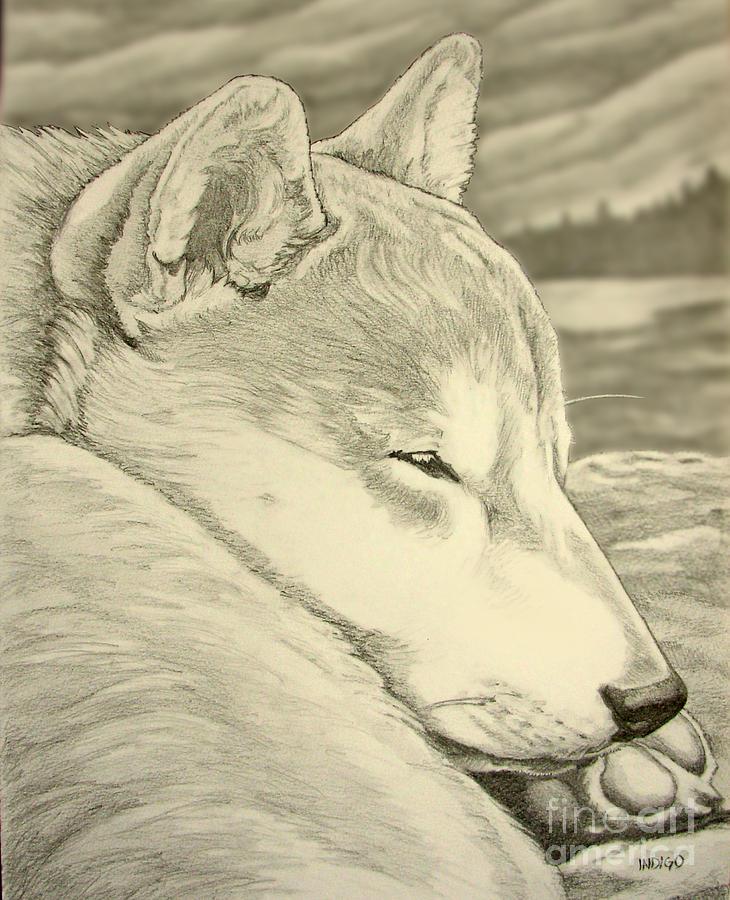 Shiba Inu Painting - Shiba Inu by Kim Hunter