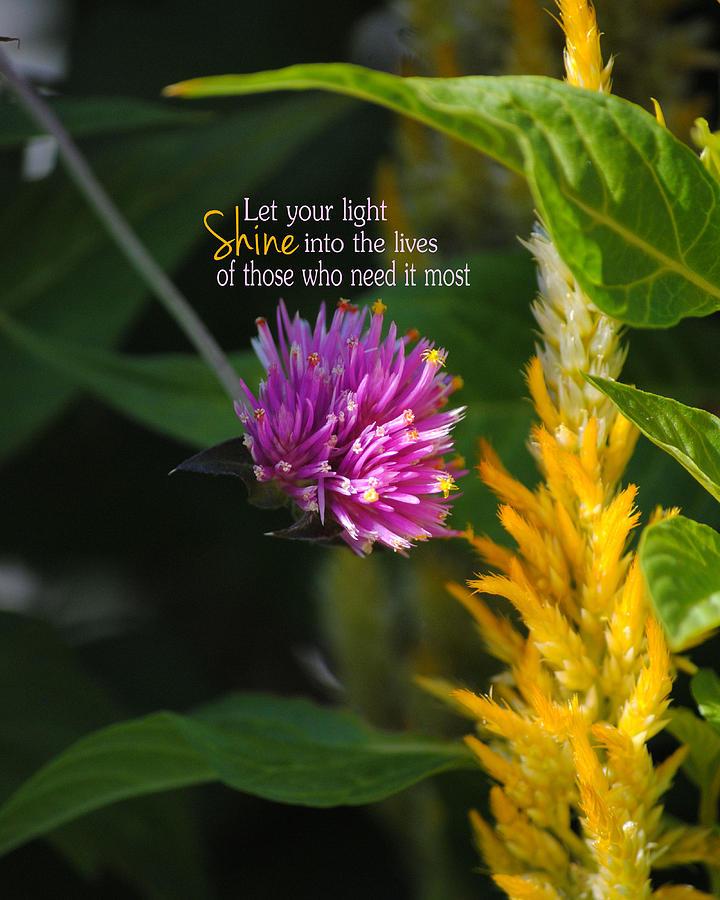 Shine Photograph - Shine Encouraging Pink And Yellow Flower Photograph by Jai Johnson