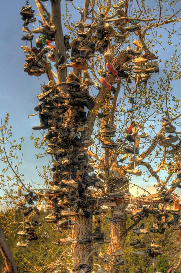 Shoes Photograph - Shoe Tree by Lori Kimbel
