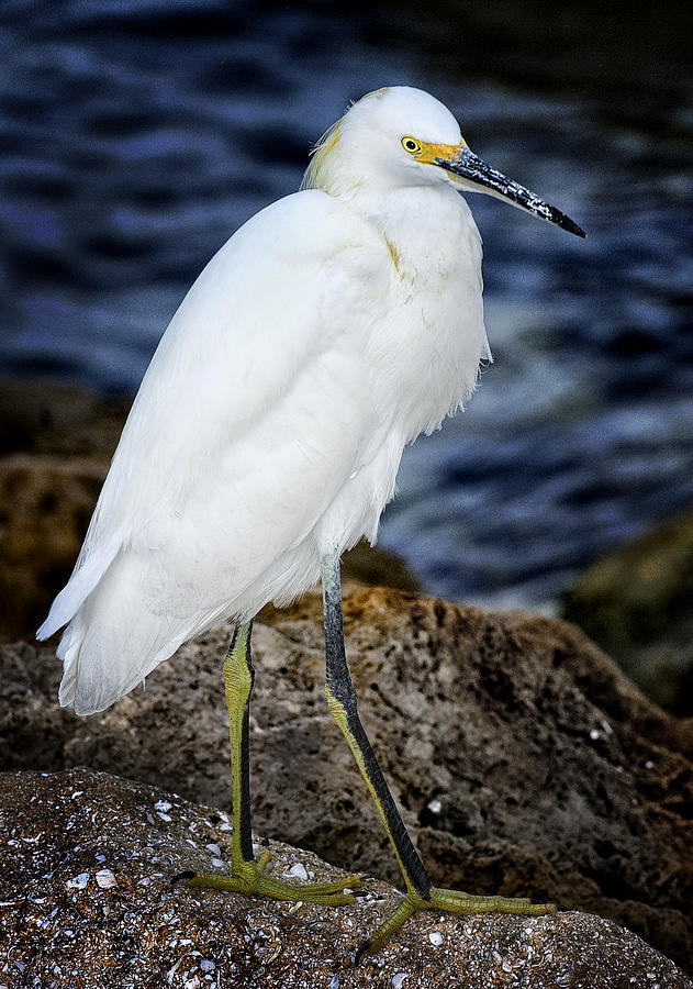 White Photograph - Shore Bird by Ercole Gaudioso