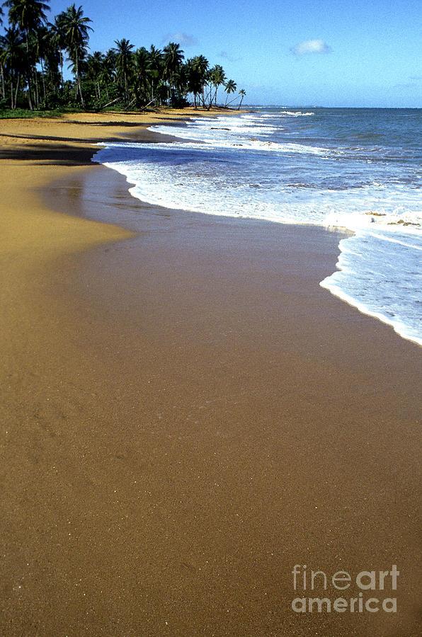 Puerto Rico Photograph - Shoreline Along Pinones by Thomas R Fletcher