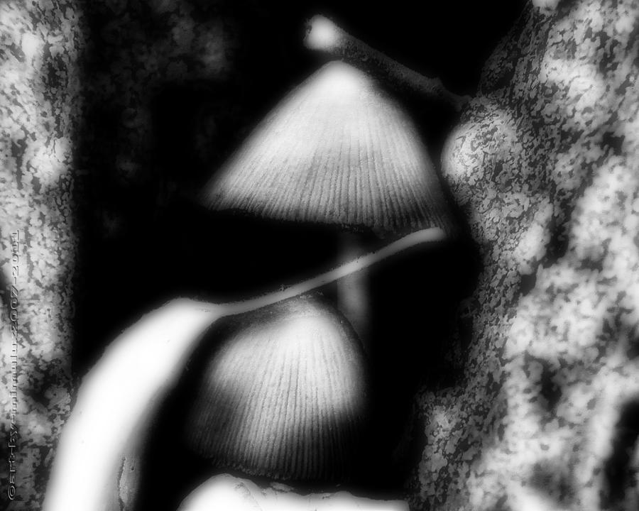 Magic Photograph - Shroom Magic by Mimulux patricia No