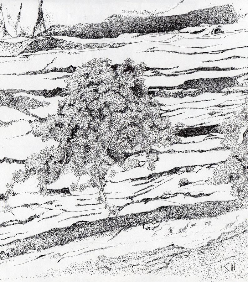 Kolob Canyon Drawing - Shrub In Sedimentary Rock by Inger Hutton