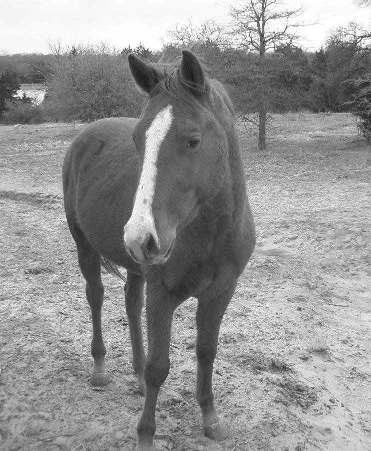 Horse Photograph - Shy Girl by Jessica Jandayan