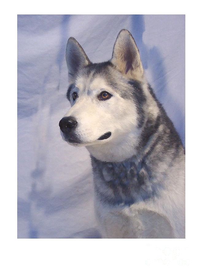 Husky Dog Show Certificates