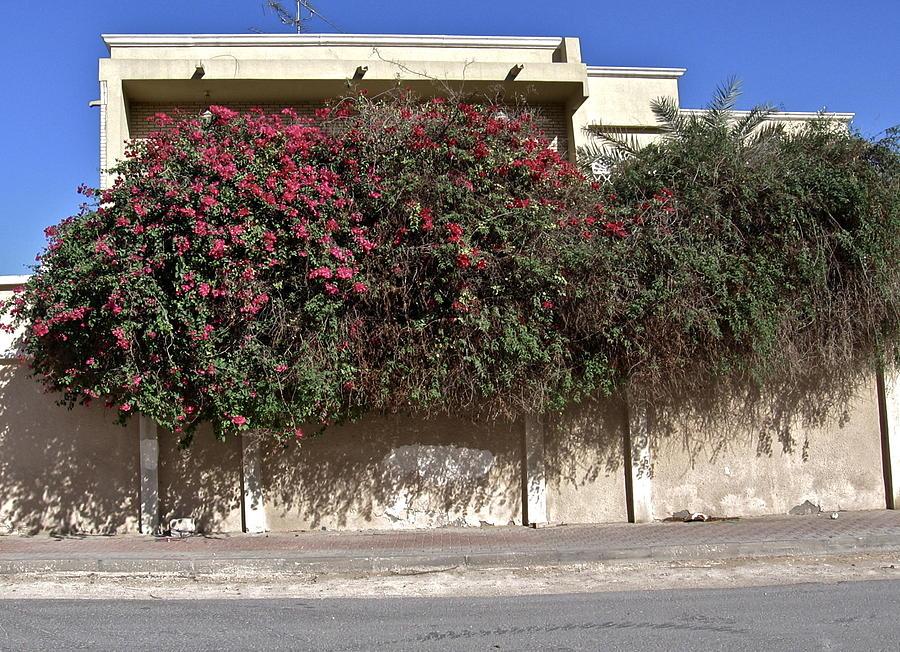 Sidewalk Photograph - Sidewalk Florae In Doha by David Ritsema