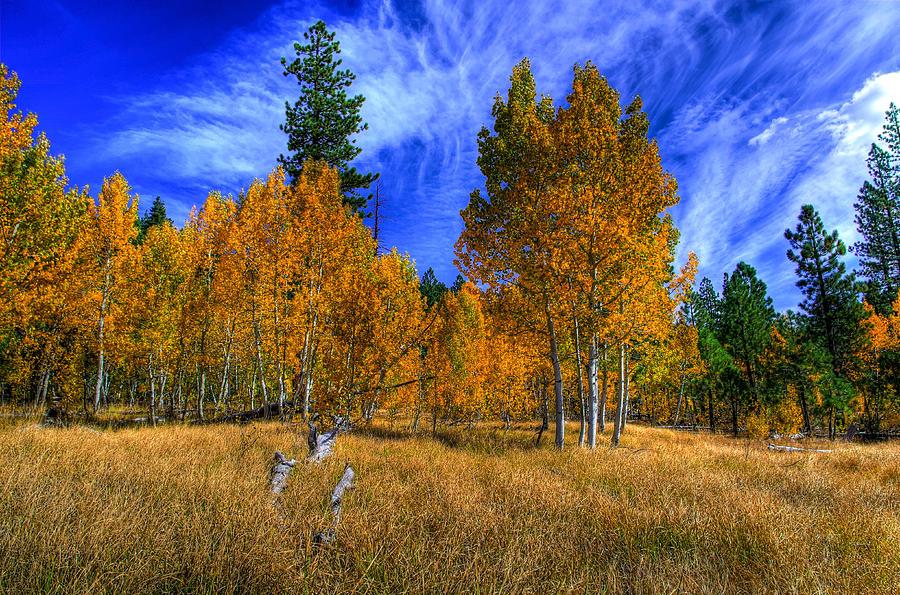 Aspen Trees Photograph - Sierra Nevada Fall Colors Lake Tahoe by Scott McGuire