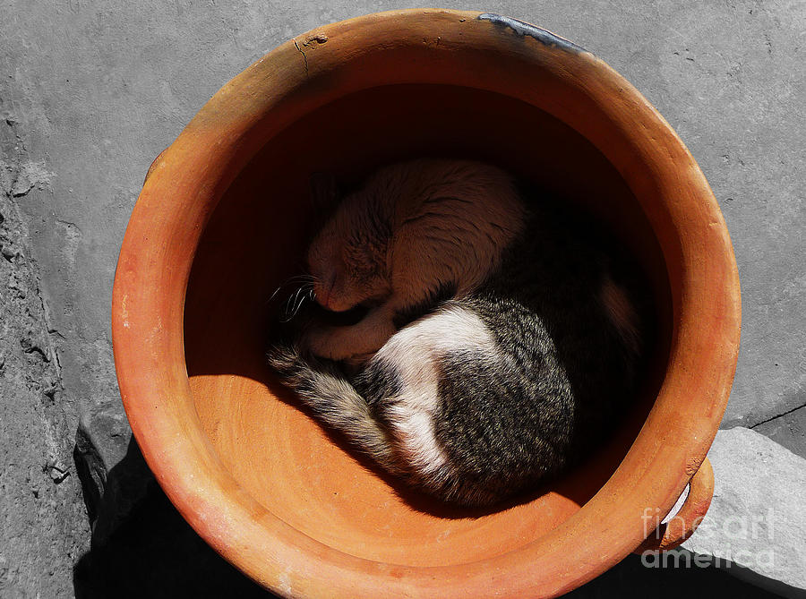 Cat Photograph - Siesta 2 by Xueling Zou