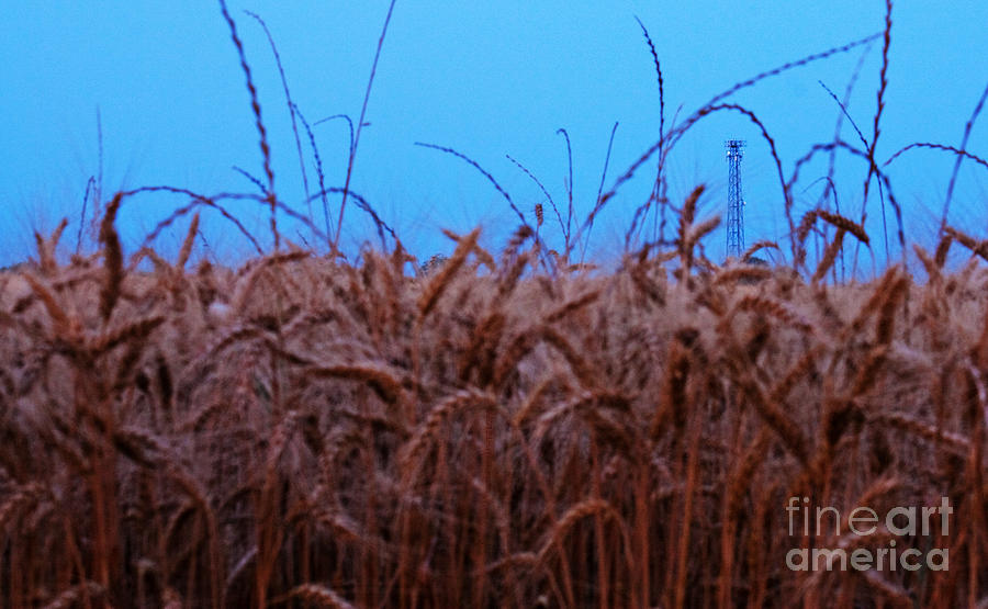 Crops Photograph - Sign Of The Times by Lisa Holmgreen