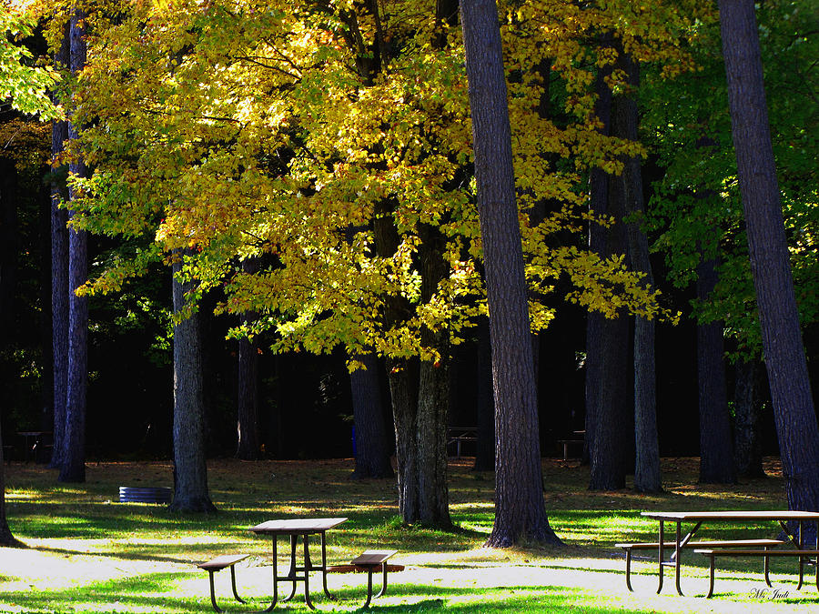 Park Photographs Photograph - Silence In The Park by Ms Judi
