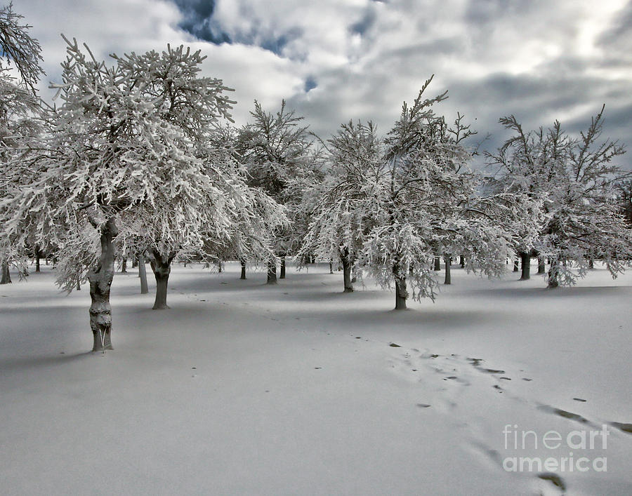 Snow Photograph - Silent Winter by Phil Pantano
