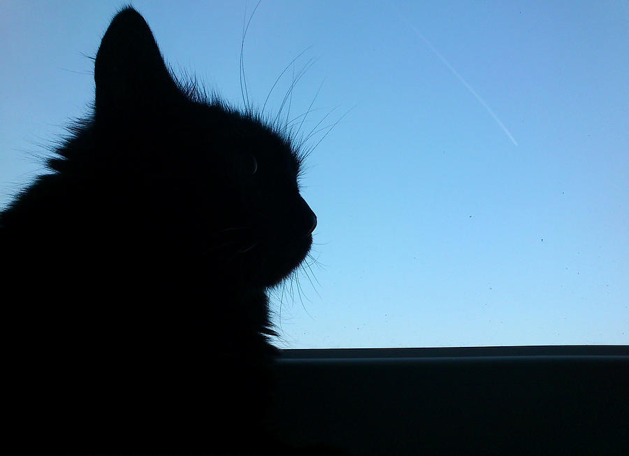 Cat Photograph - Silhouette by Lucy D