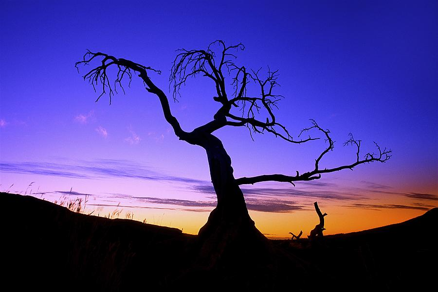 Silhouette Of A Tree At Sunset Photograph By Carson Ganci