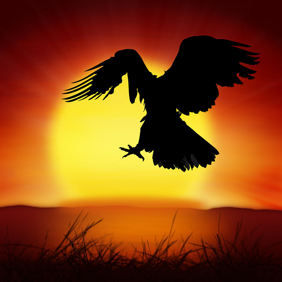 Animal Photograph - Silhouette Of Eagle by Setsiri Silapasuwanchai