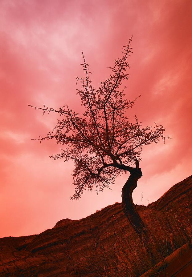 Sunset Photograph - Silhouette Of Shrub Tree by Don Hammond