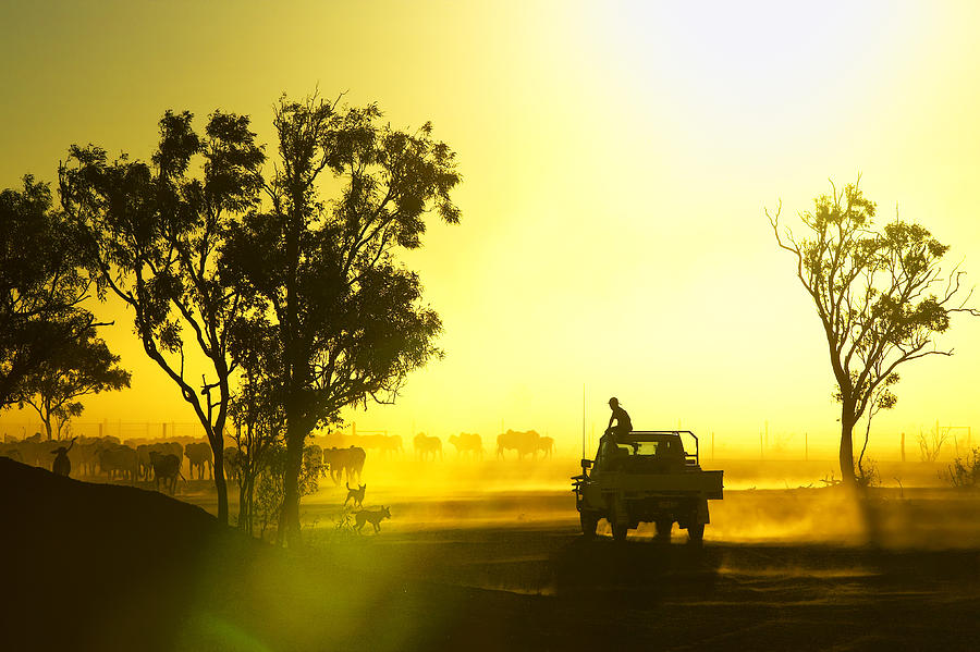 Horizontal Photograph - Silhouetted Cattle Muster At Sunset, Armraynald Station by Johnny Haglund