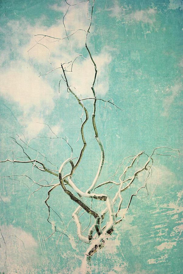 Tree Branches Photograph - Silver Twist by Sharon Kalstek-Coty