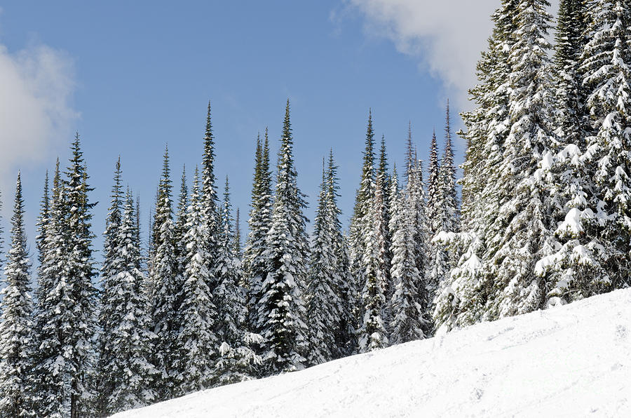 Silverstar Hill Snow Covered Alpine Meadow Silver Star Photograph