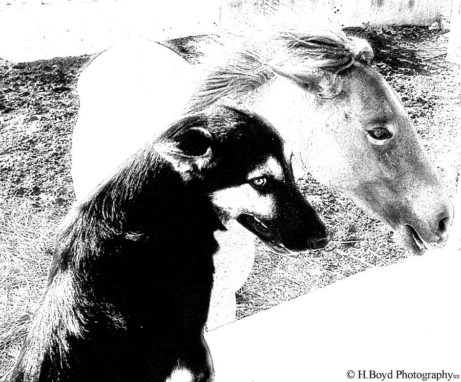 Dog Photograph - Similar Spirits by Heather  Boyd