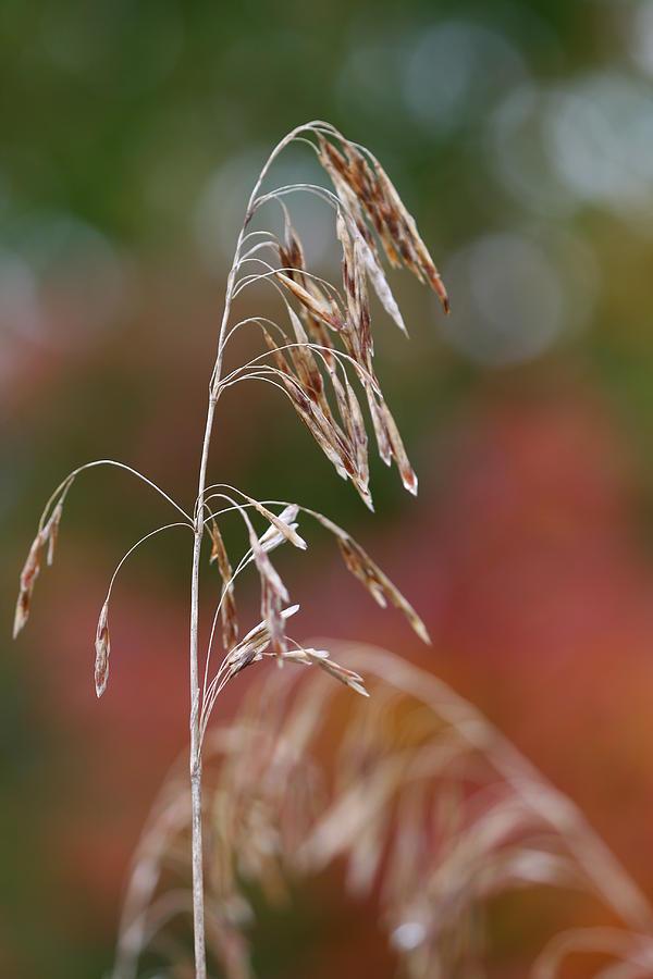 Nature Photograph - Simple Nature by Brady D Hebert