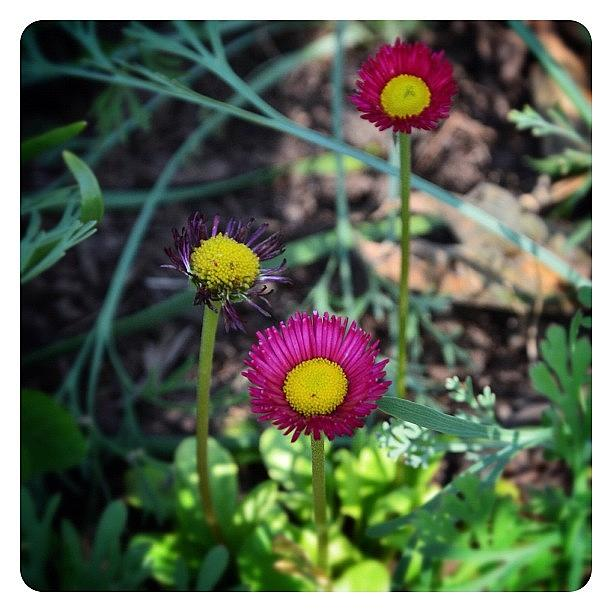 Flower Photograph - Simple Sweetness by Natasha Marco