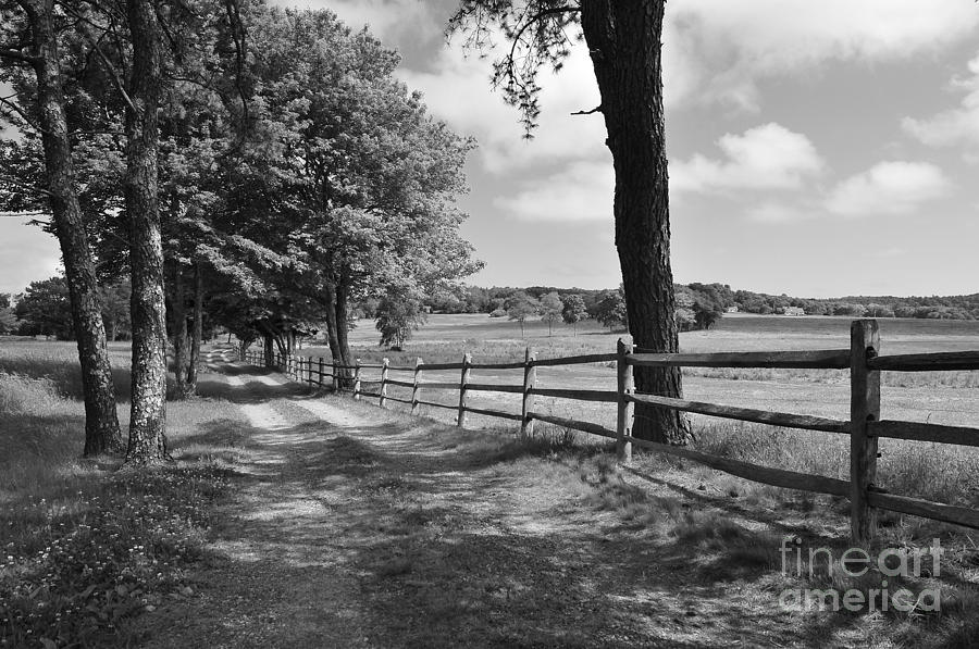 New England Photograph - Simple Times by Catherine Reusch Daley