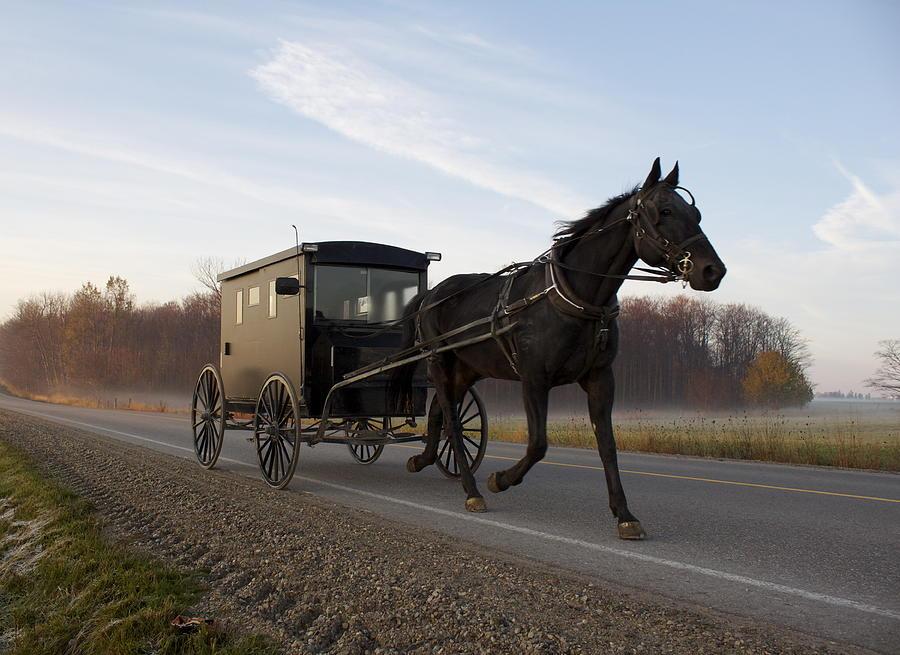 Horse Photograph - Simple Times by John-Paul Fillion