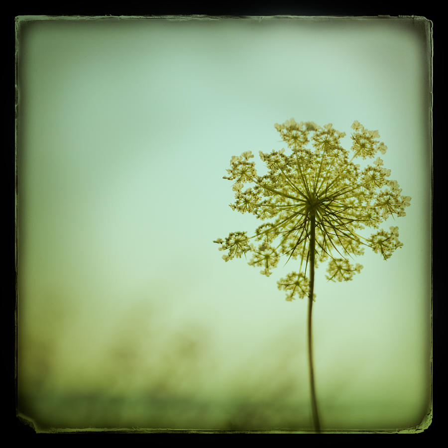 Ttv Photograph - Simplexity by Irene Suchocki