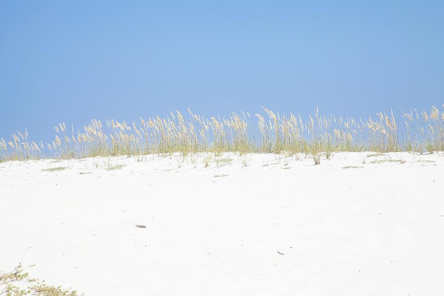 Sea Oats Photograph - Simplicity by Toni Hopper