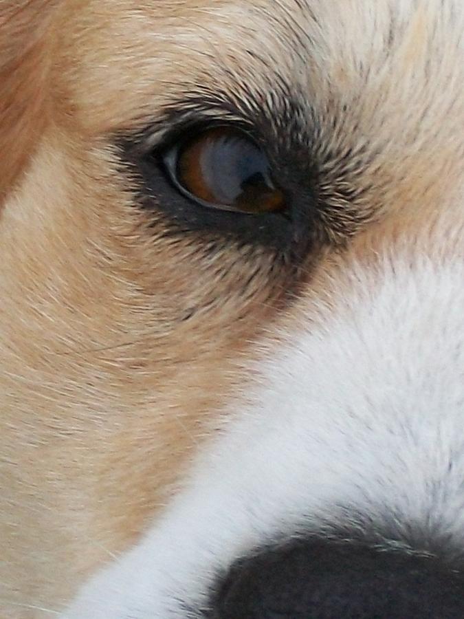 Dogs Digital Art - Sincerity by Wide Awake Arts