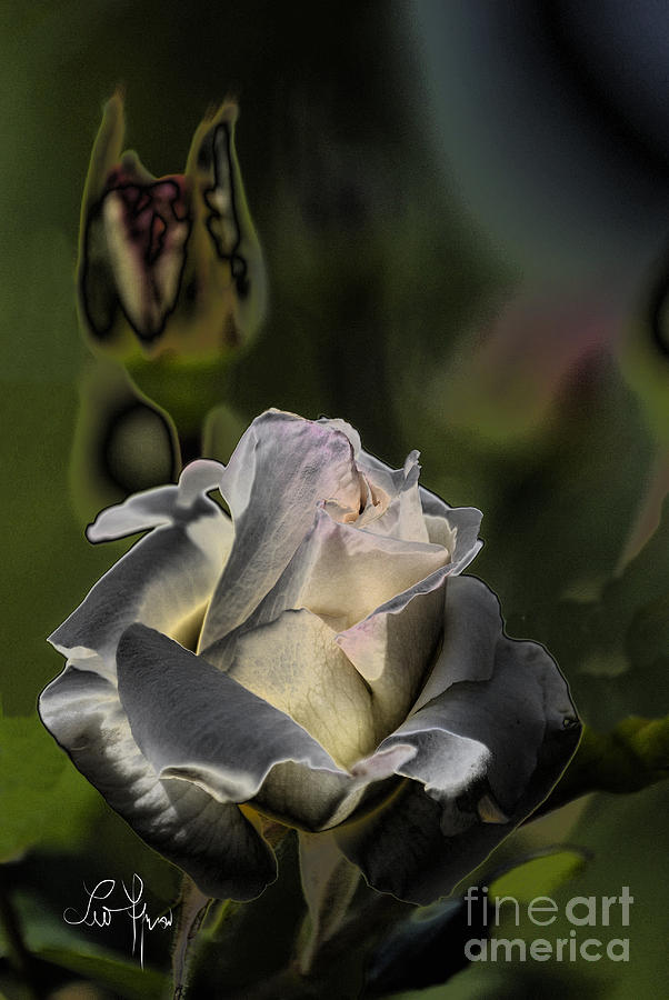 Sin Photograph - Sinful Rose by Leo Symon
