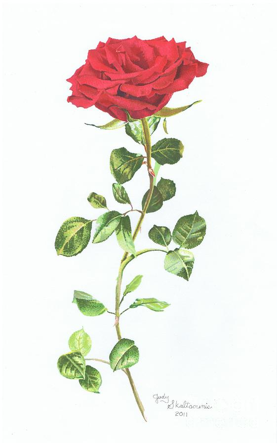 single red rose drawing by judy skaltsounis. Black Bedroom Furniture Sets. Home Design Ideas