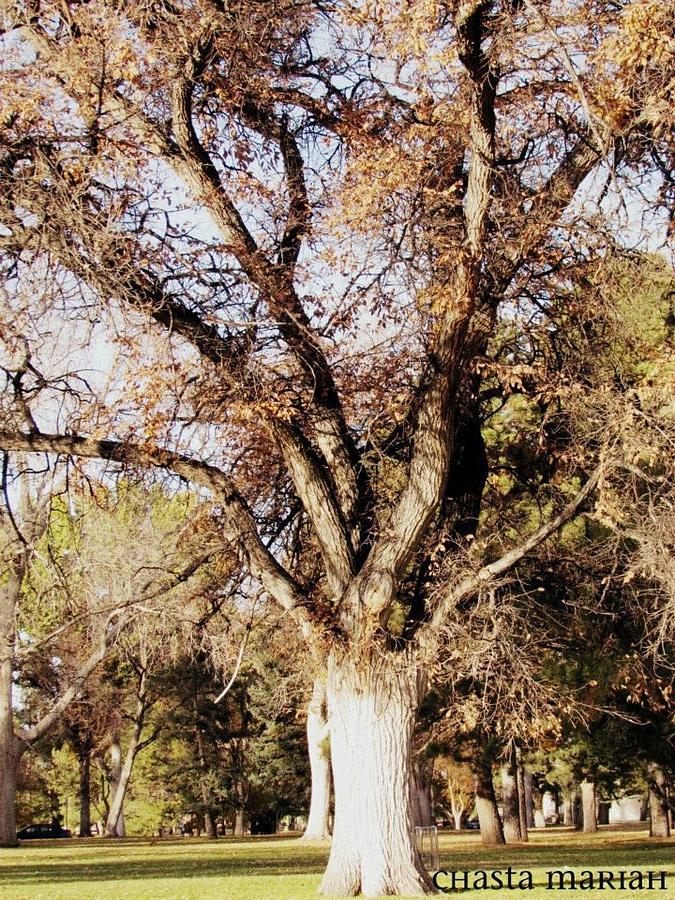 Single Tree Photograph by Chasta Mariah