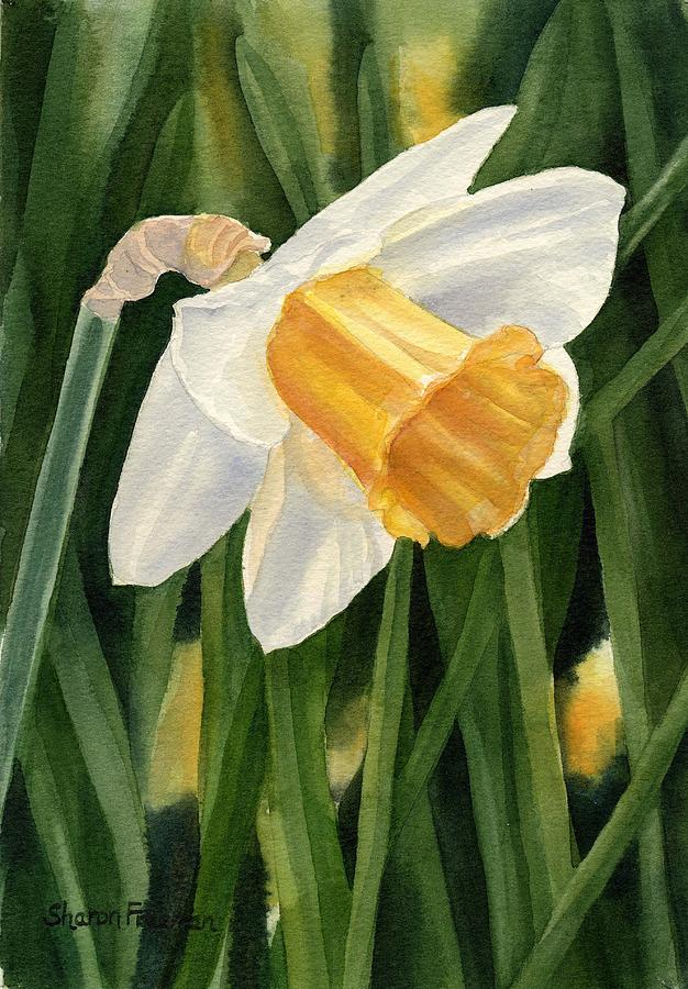 Daffodil Painting - Single Yellow Daffodil by Sharon Freeman