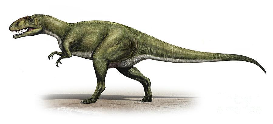 """Image result for Sinraptor"""""""