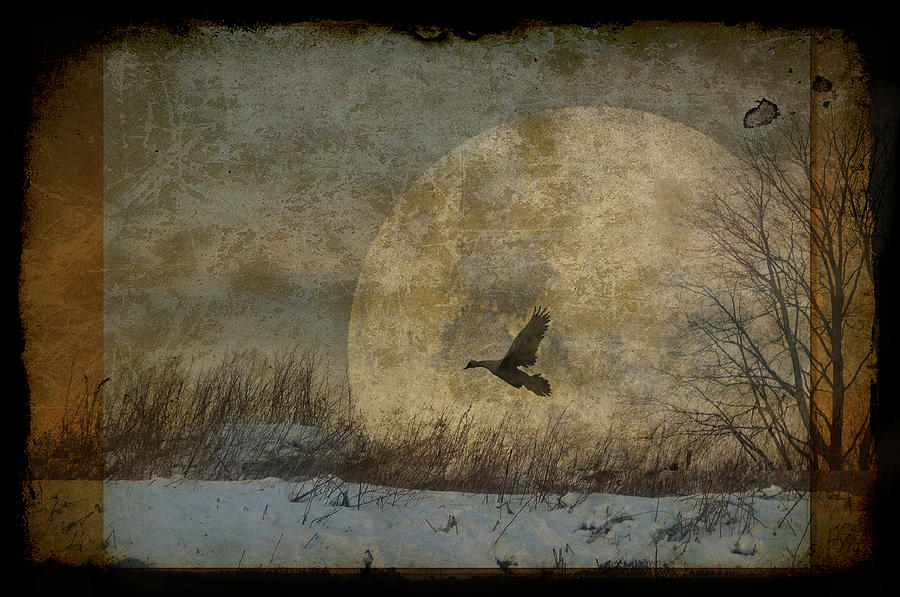 Moon Photograph - Sister Moon by Marie  Gale