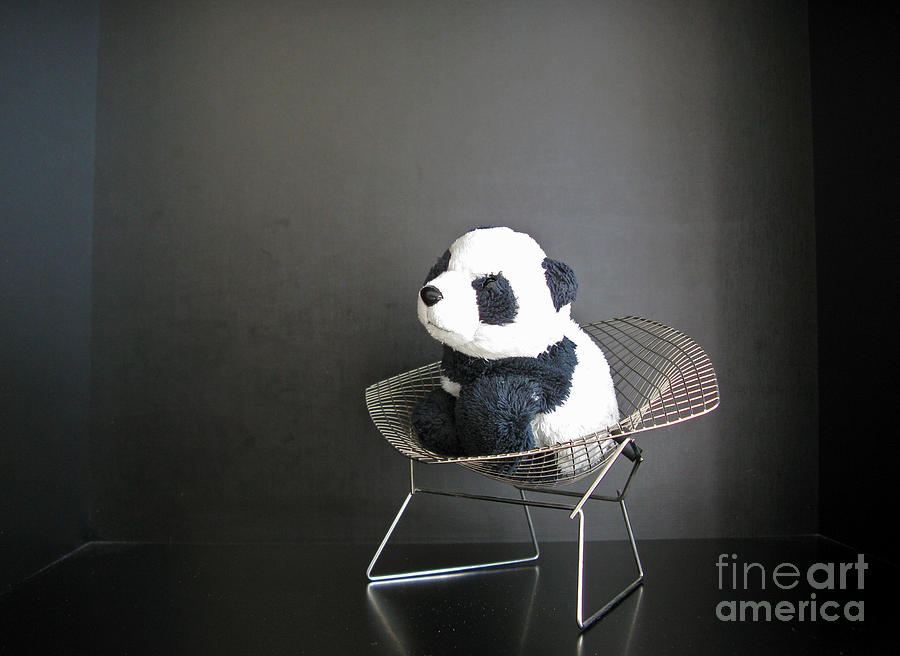 Baby Panda Photograph - Sitting Meditation. Floyd From Travelling Pandas Series. by Ausra Huntington nee Paulauskaite