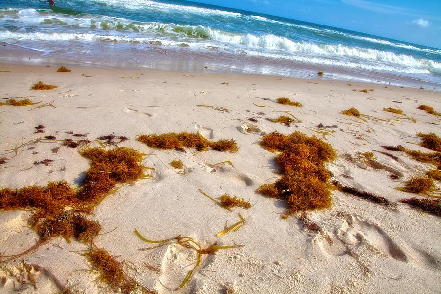 Beach Photograph - Sitting On The Beach by Toni Hopper